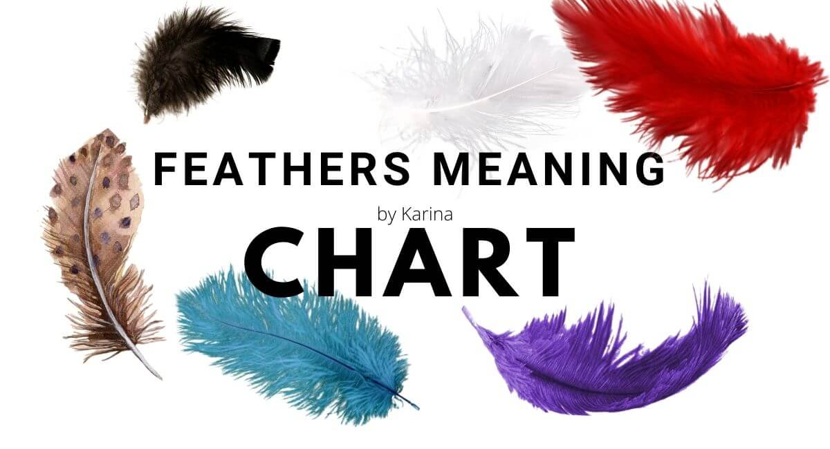 Feather Meanings Chart KarinaCollins.ie